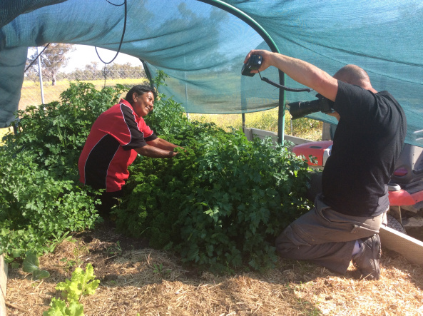 Walgett Aboriginal Medical Service Co-op Ltd Sophia Byers Community Market Gardens